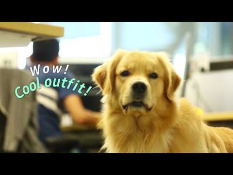 Canine Employees at Samsung Research America