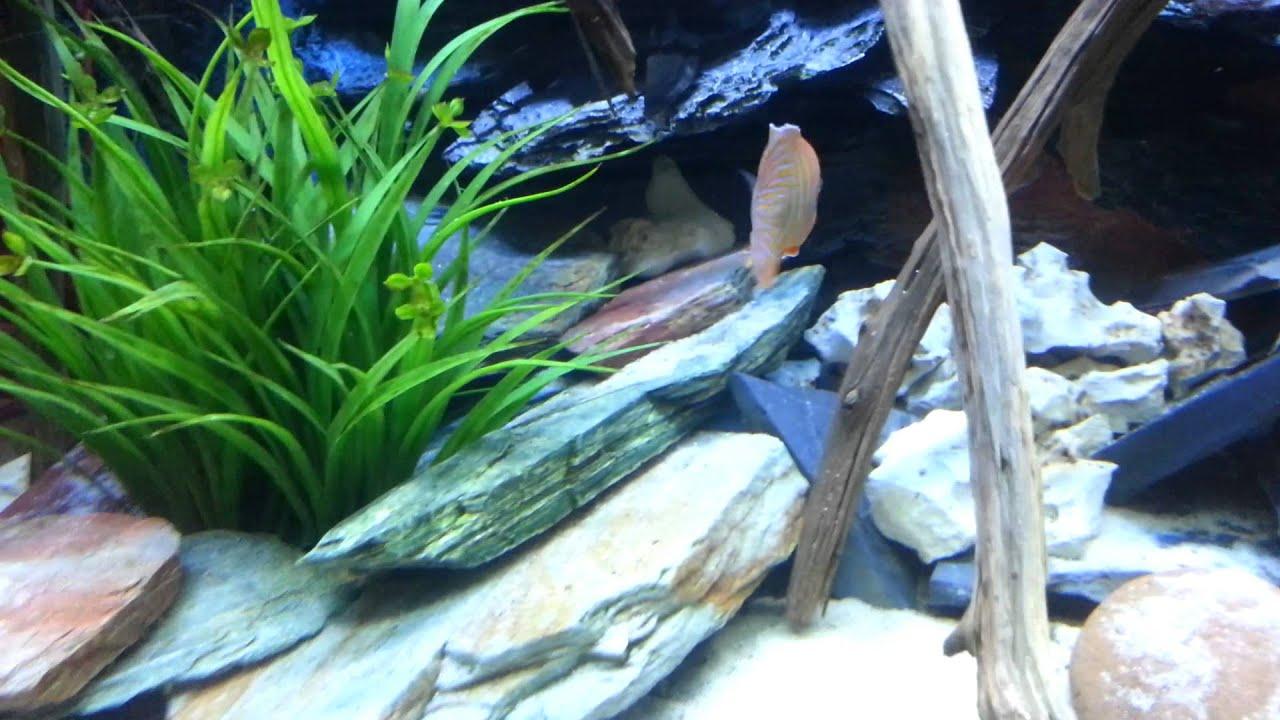 Freshwater aquarium fish dallas - The Fish Gallery Dallas Texas