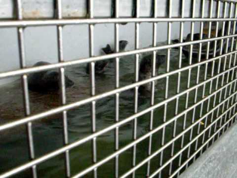 Feeding The Seals At Seaside Aquarium