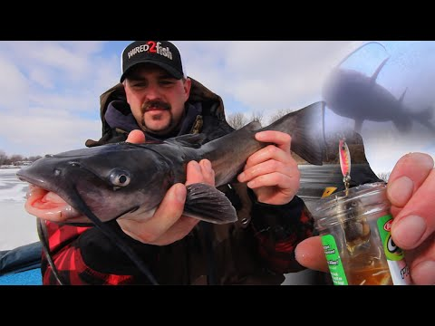 Ice fishing for channel catfish youtube for Ice fishing for catfish