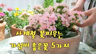 사계절 꽃피우고 삽목까지 잘되는 화초 5가지/가드닝16…