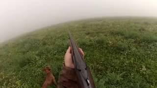 Охота с русским охотничьим спаниелем. Hunting with Russian Spaniel.