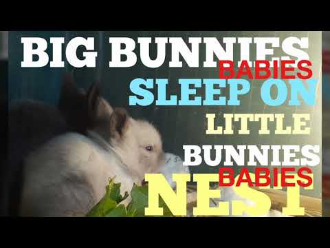 BIG BABY BUNNIES SLEEP ON LITTLE BABY BUNNIES NEST