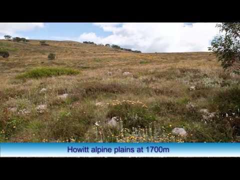Camping At Mount Howitt Victoria Hans Kosmer YouTube