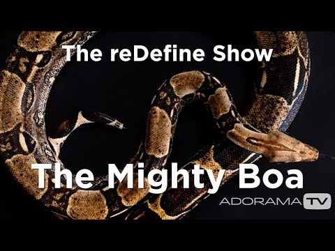 Photographing The Mighty Boa: The ReDefine Show - Animal Edition! With Tamara Lackey