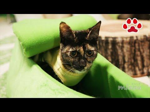 猫とバナナと枝豆【瀬戸の猫部屋日記】Cats and banana and green soybean