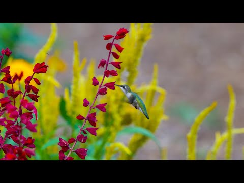 Pollinator Garden on a Budget