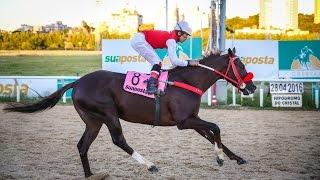 Grande Prêmio Derby Riograndense - Listed 2016
