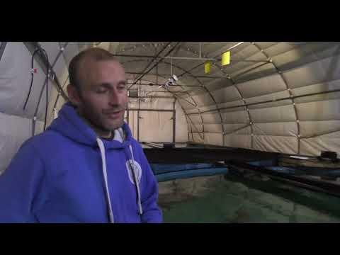 """UK's first """"no kill"""" sturgeon caviar farm"""
