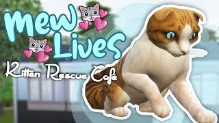 A Tasty New Opportunity!! 🐱💕 Mew Lives: Kitten Rescue Café! • #2