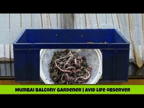 How To Start New Composting Worm Bin Step By Step Diy