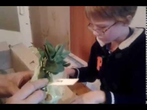 Сорт земляники садовой - Генри - YouTube
