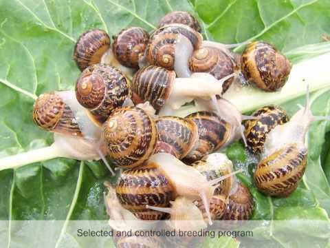 Things to Know Before Starting Your Snail Farming Business | ToughNickel