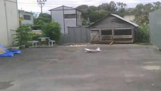 地上を走る飛行機サバンナ!