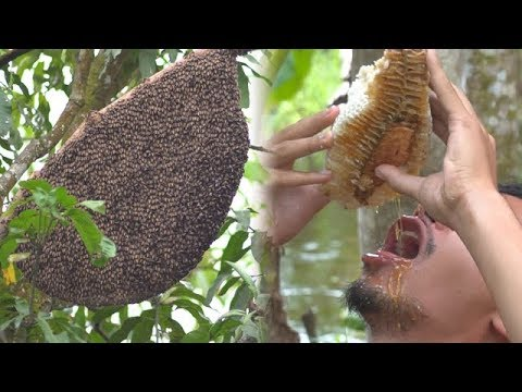 Primitive Technology: Giant honeycomb in the forest vs drink honey there | Wilderness Technology