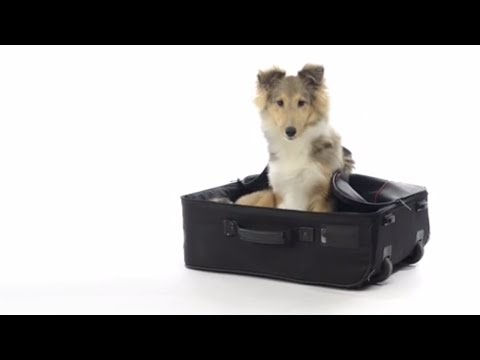 Pet Travel Tips and Guidelines | Pets Plus Us