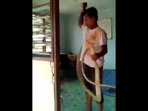 Man Grabs Giant Wild Snake With His  Bare Hands In Just Few Seconds -The Snake Whisperer