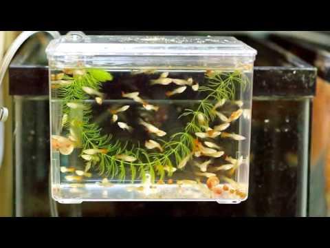 Marina Breeding Box Youtube