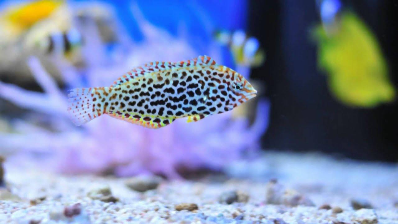 i pesci marini in aqua studio roma youtube