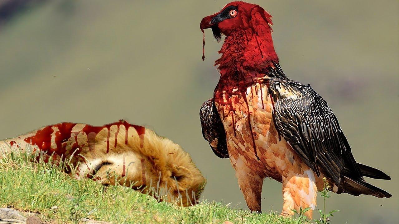 أخطر 9 طيور دموية على كوكبنا.. اهرب فوراً عند رؤيتهم !!