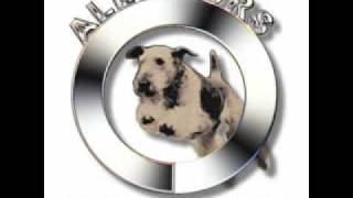 Chicago Dog Agility Training All Fours Dee-kaleigh.wmv