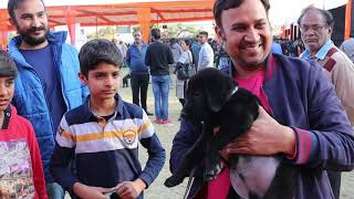 Jaipur Dog Show 2020 | Breeders With Contacts | Kci Dog Show | Dog Market |  Scoobers | Dog Show