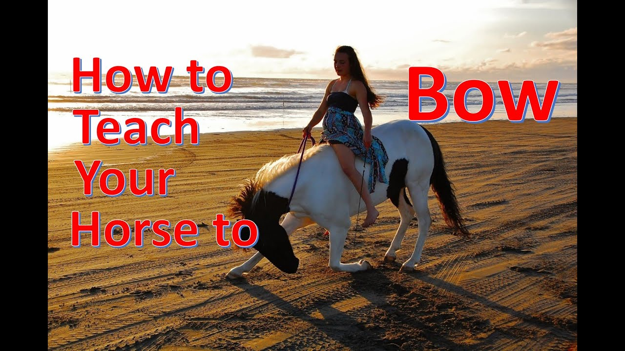 How to Teach Your Horse to Bow [NO ROPES]