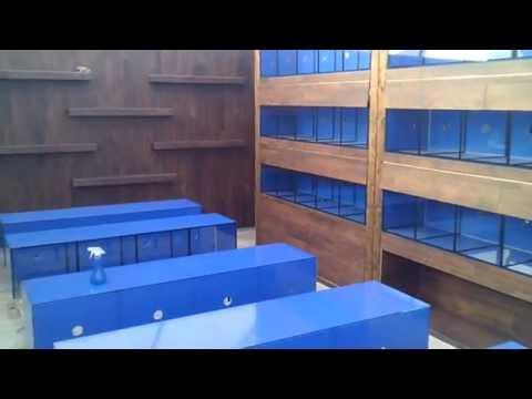 Building An Aquatic Store Week 8
