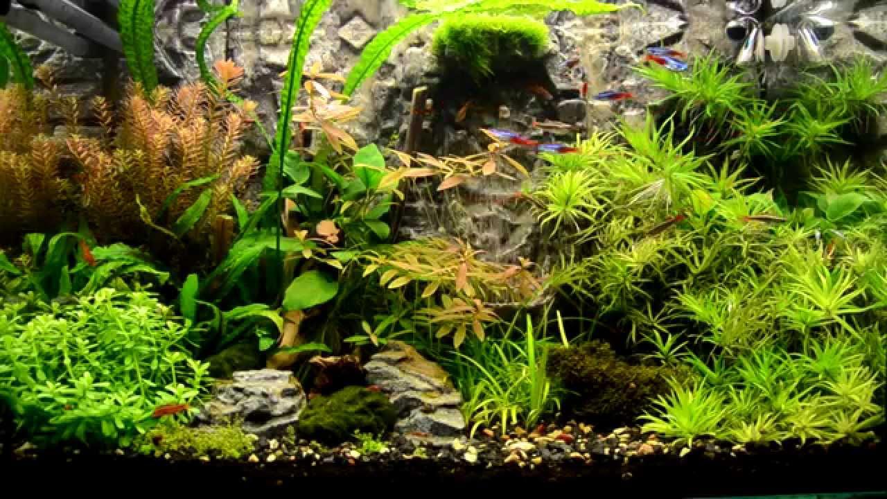 Фон для аквариума (34 фото