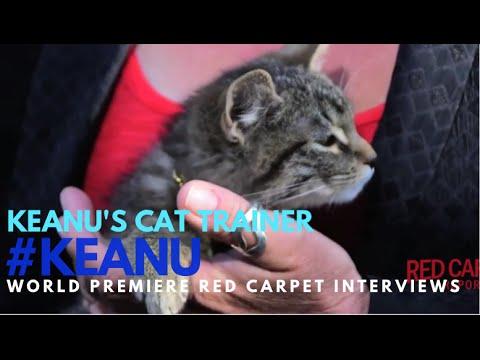"Keanu's Cat Trainer interviewed at the premiere of ""Keanu"" #KEANU #KeyandPeele"