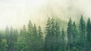 Suara hujan deras dan petir terapi pengantar tidur nyenyak