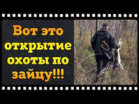 Охота на зайца с Русской гончей. Вот это я понимаю открытие.