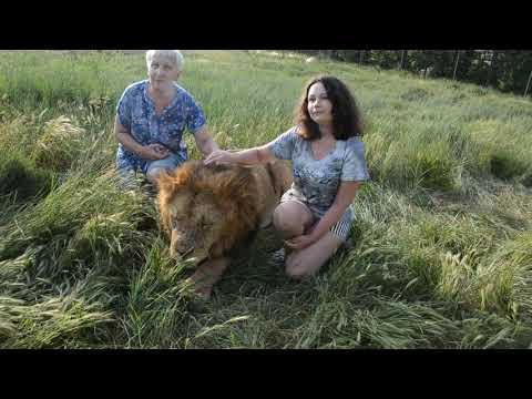 Фото с львом МАЛЫШОМ и львицами ЧОЛИТОЙ и КЛЕОПАТРОЙ !