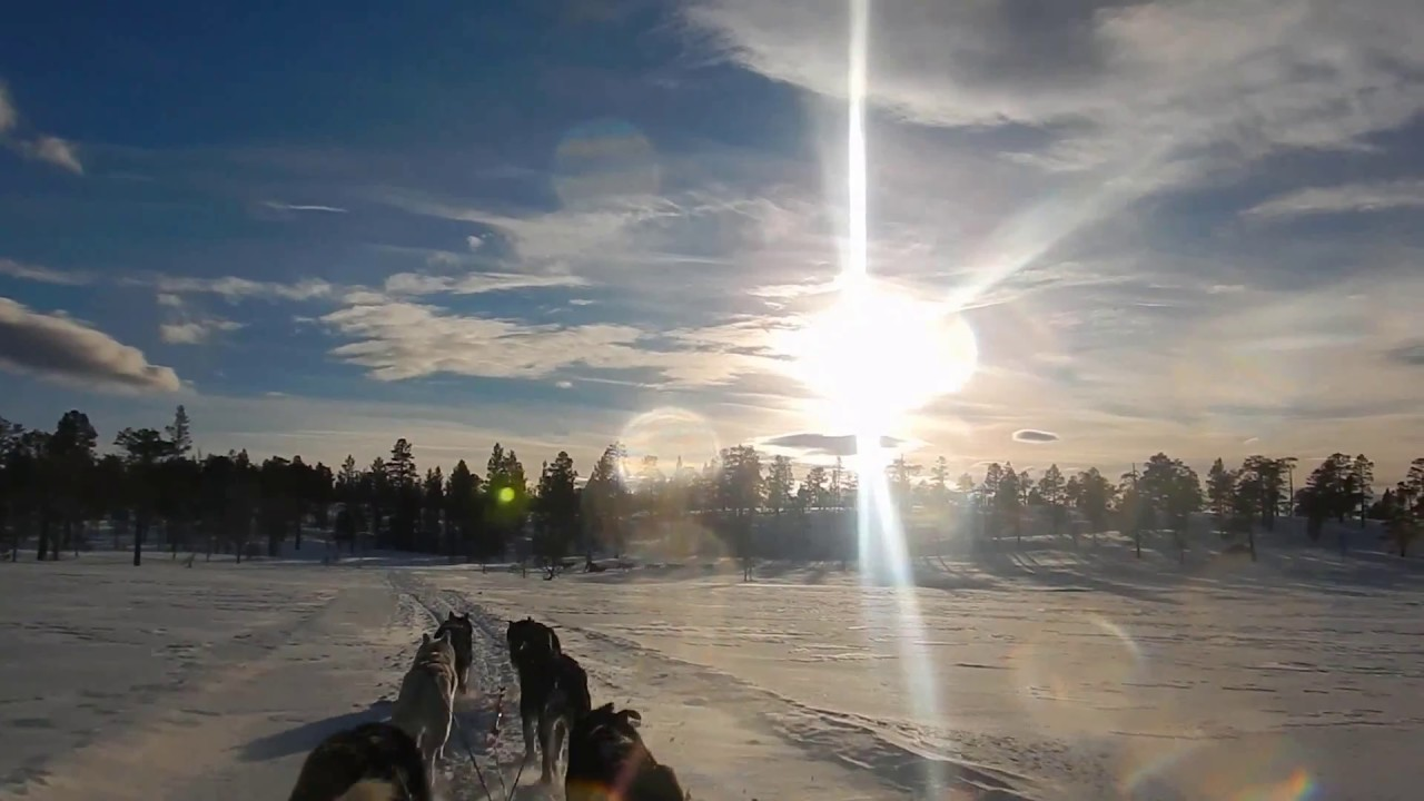 Video thumbnail of Norway Husky Adventure by Denise Vilsteren