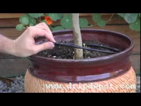 How To Create A Tree Watering Ring In A Drip Irrigation