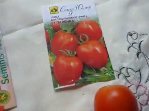 любимые сорта и гибриды томатов