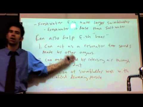 Swim Bladder Lecture