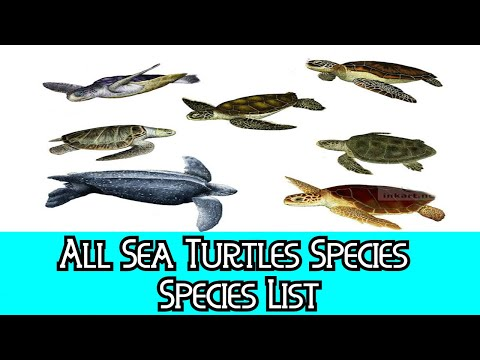 All Sea Turtles Species - Species List