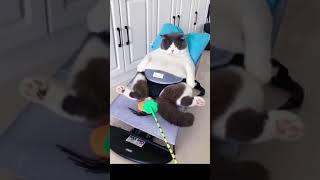 FAT CAT IN STROLLER
