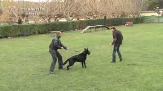 Adiestramiento de perros para Víctimas de violencia de Género