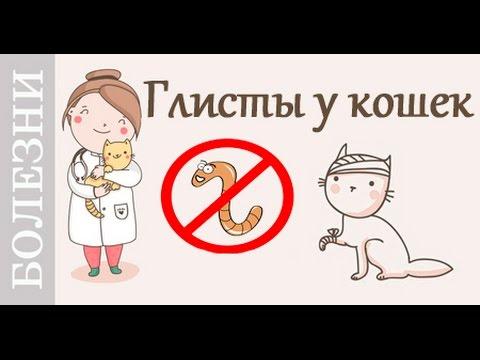 Глисты у кошки, таблетки от глистов. Советы ветеринара