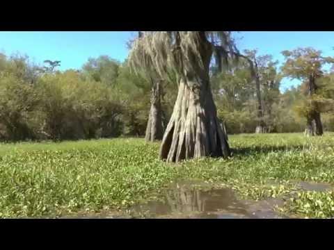 Atchafalaya Swamp Tour USA 2016
