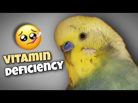 ♧ Vitamin Deficiency In Birds