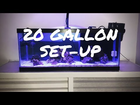 20 Gallon Long Set-up
