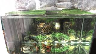 Красноухая черепаха Остров по-американски в аквариуме на 200 литров