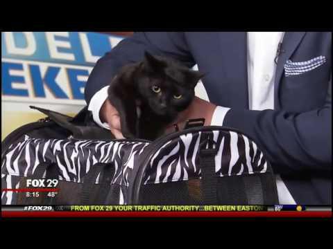 Pam Johnson-Bennett  On Fox Philadelphia For The CatWise Cat Cafe Tour
