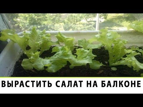 Вопрос: Как можно вырастить укроп на балконе?