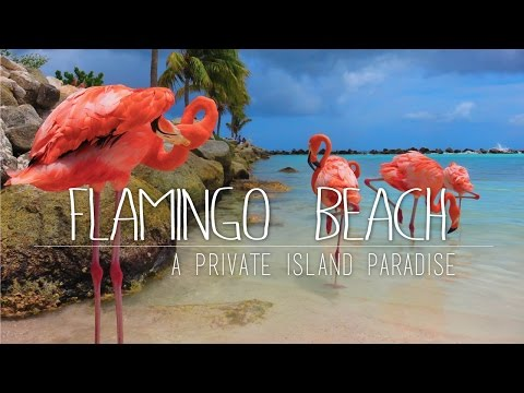 Flamingos On A Private Island  Renaissance Island ARUBA