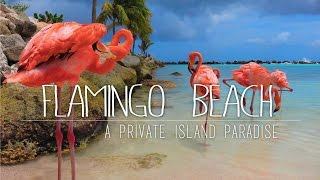 Flamings on a private island in the Caribbean, or to be more specif...