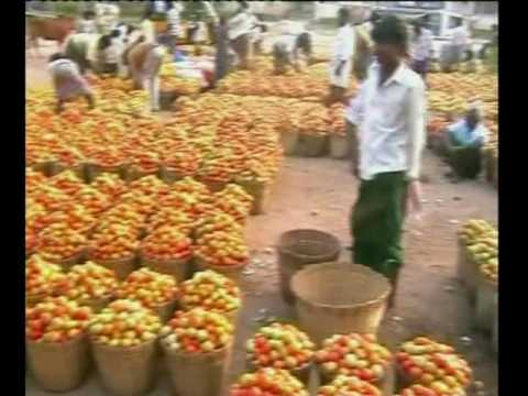 TOMATO MARKET TOMATOES FARMERS TOMATOES ON ROAD FOR LOW RATES VIS